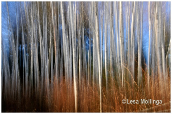 Photo Impressionism - White Alders